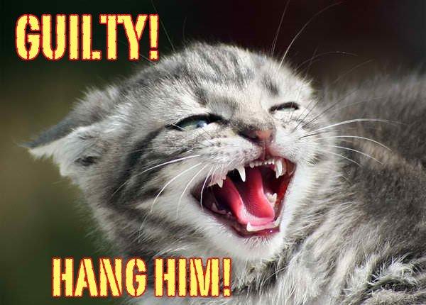 Les chats sont cruels...