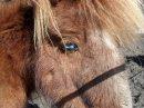 Photo de passion-is-horse