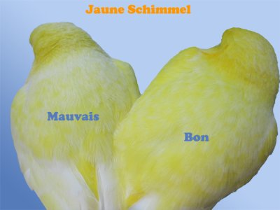 differanse jaune chimele.