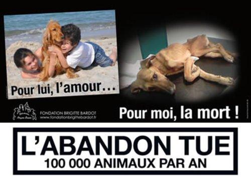 100 000 animaux abandonnés chaque année en France
