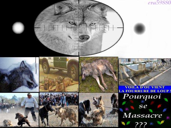Chapitre 2:La chasse