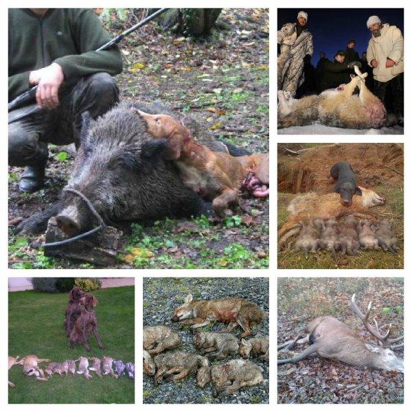 la chasse en tout genre