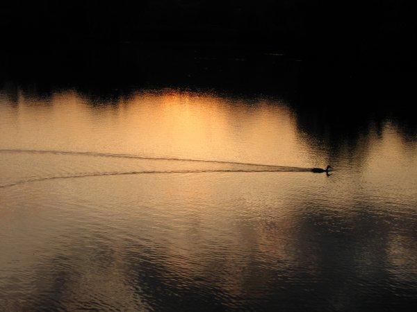 Deux jours de pêche sans nuit car non autorisé par mon aappma.