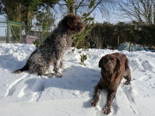 Coucou!! Je vous donne de mes nouvelles . J ai decouvert la neige et j aime beaucoup..........