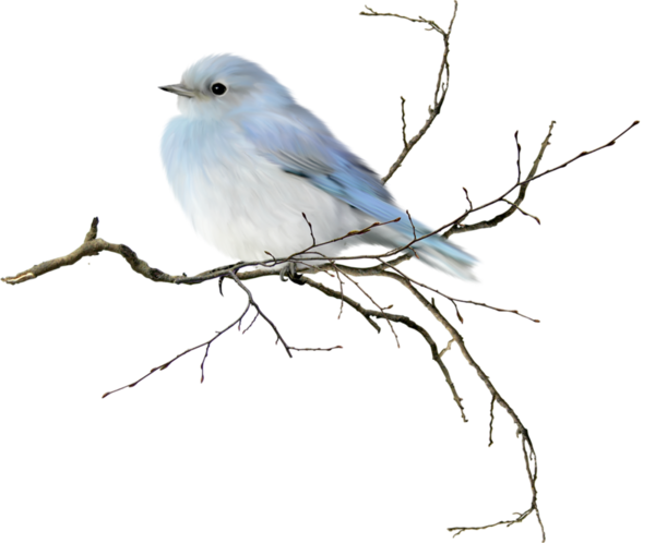 .oiseaux