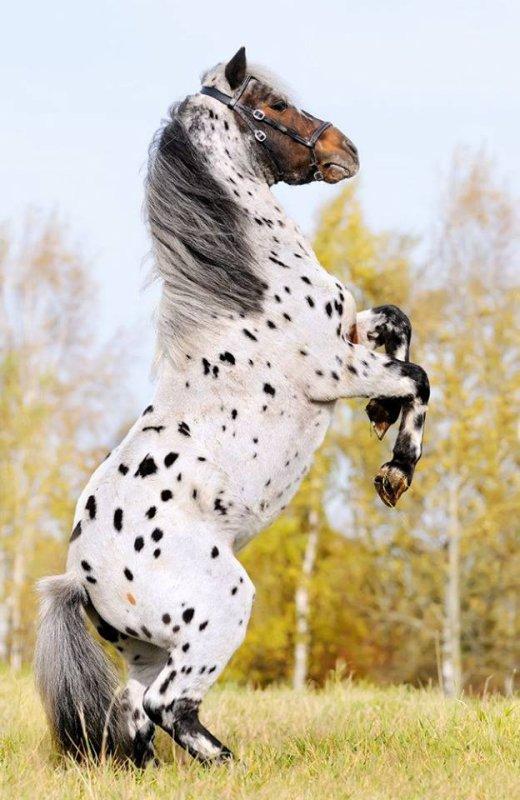 chevaux et licornes