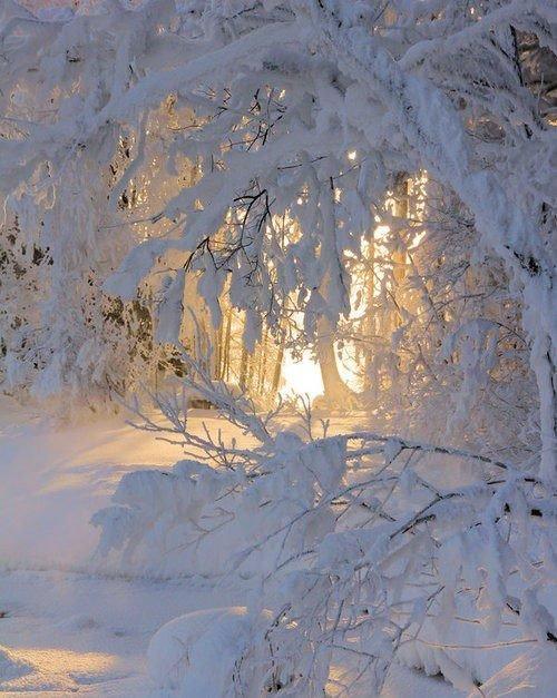 paysages en neigés