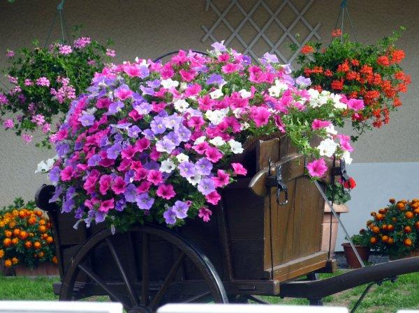 fleurs et arbres fleuris