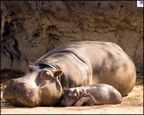 maman et leur bb