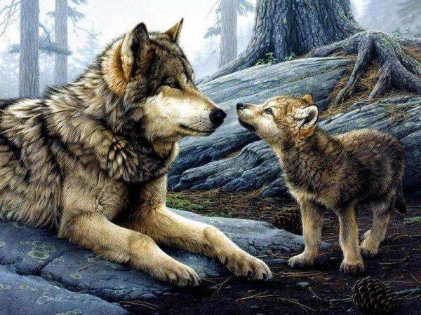 ameridiens et loups