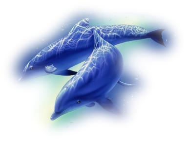 dauphins et coquillages