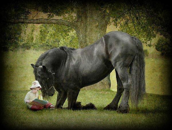 chevaux et poulains