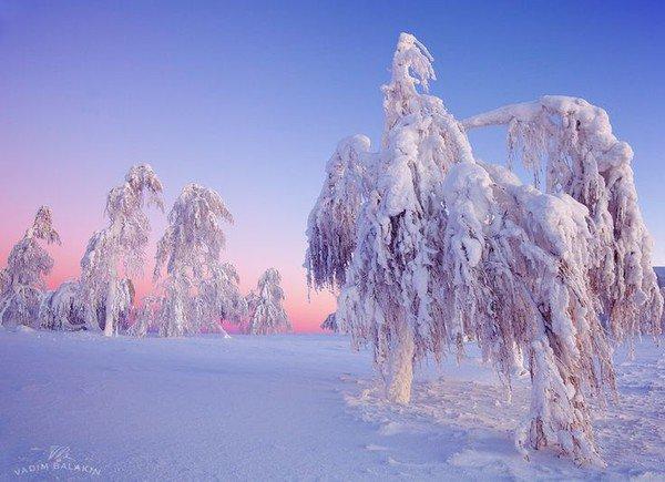 arbres,forets et forets enchantées