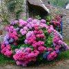 fleurs du monde