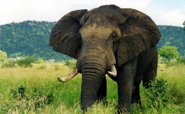 élèphants et leurs petit