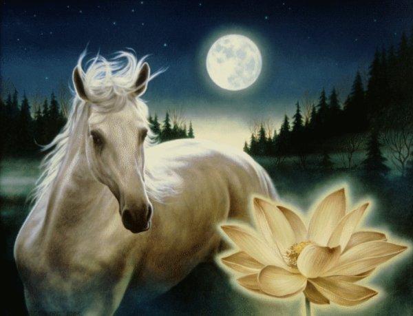 la lune dans tout sa splendeur