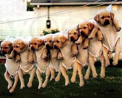 chiens et chiots