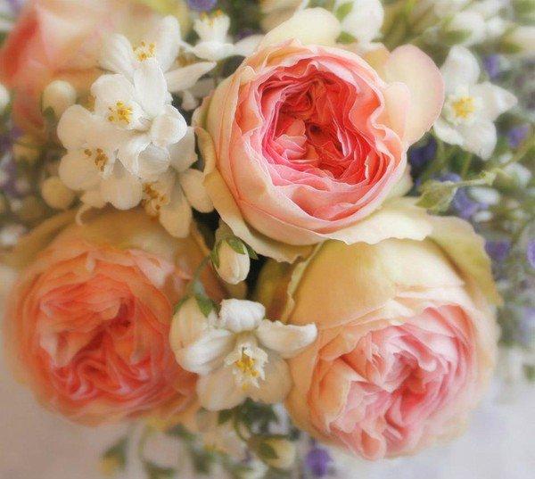 les roses