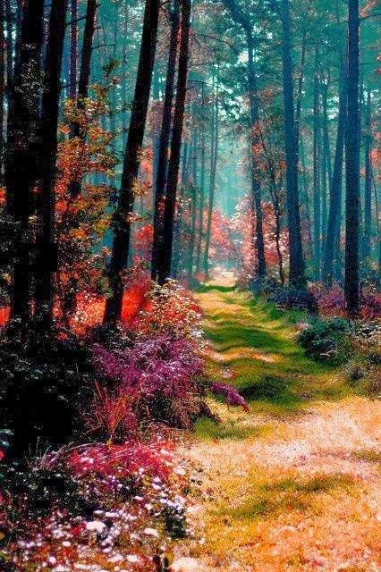 chemins, sentiers,allées .....
