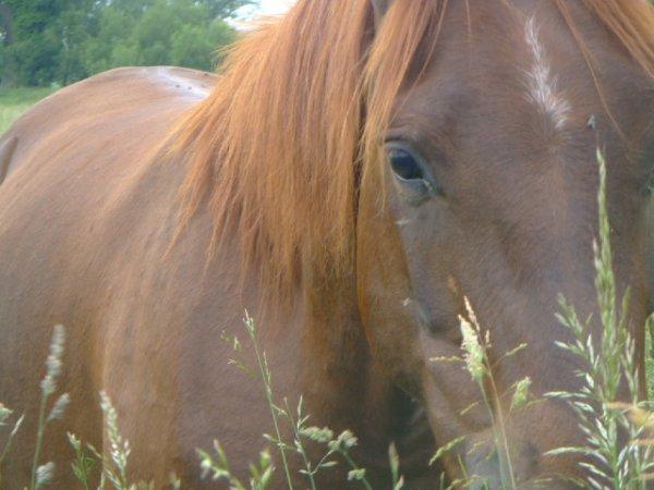 Tel un cheval sauvage tu cours après l'amour mais tu ne le rattrape jamais ...