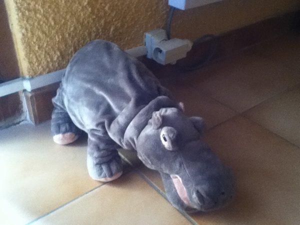 L'hippo de abby