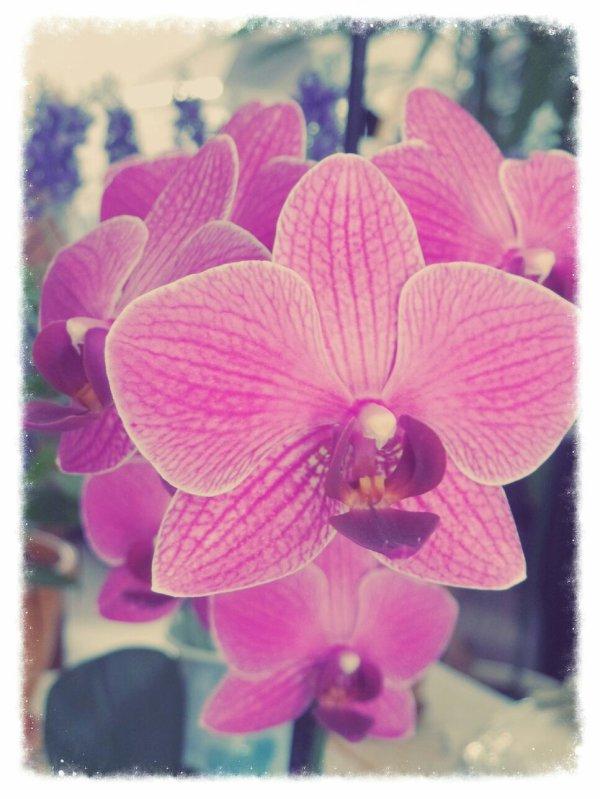 Une de mes préférées fleurs de maison;) engoy! À y est..:p mon grand père a un jardin..humm