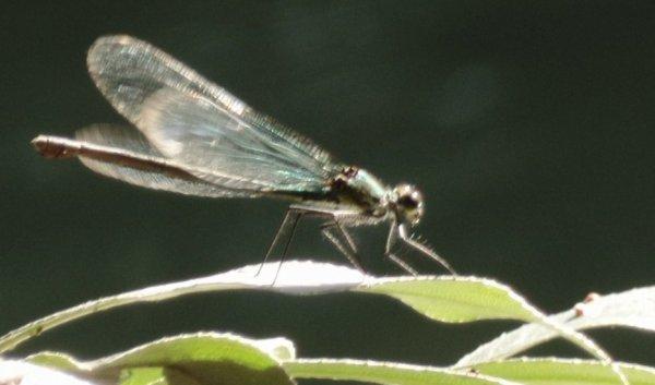 qu'est ce que c'est beau les choses vivantes volantes! :o<3