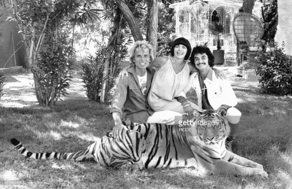 Mireille Mathieu et les magiciens Siegfried et Roy avec un des tigres de leurs spectacle en juin 1978 aux Etats-Unis