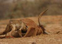 vie de chienne à cause des rats