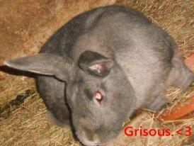 Grisous...