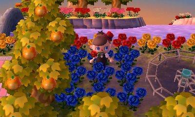 Comment avoir des fleurs hybrides?