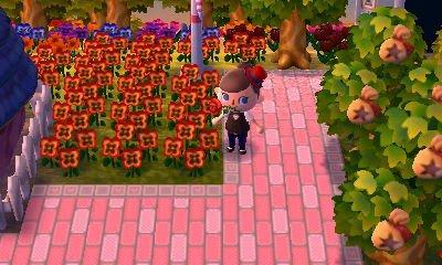 Comment avoir des fleurs hybrides? (2)
