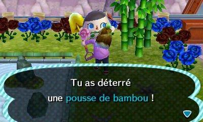 Le bambou.