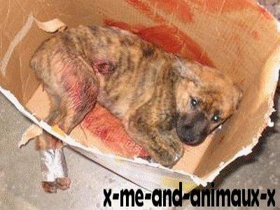 Non aux animaux maltraités !