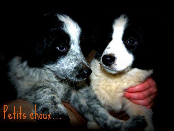 Mes petits chiots...