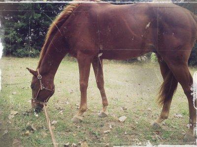 « L'air du paradis est celui qui souffle entre les oreilles d'un cheval. »