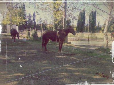 « Le cheval est la plus noble conquête que l'homme ait jamais faite. »
