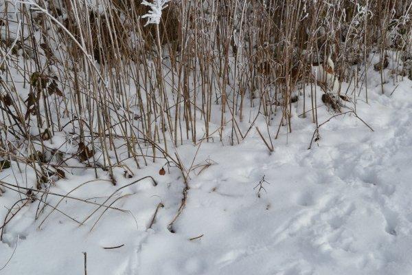 Bonjour à tous , j'ai froid aux pattes!!!!!! le 21 janvier 2013 à EPEHY// PS;sur la 3eme photo chercher ETOONE
