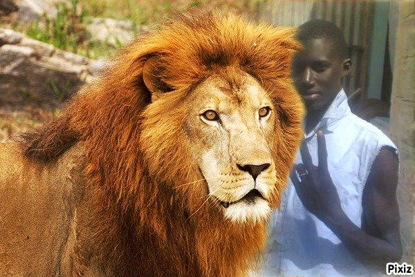 mbaye et le lion