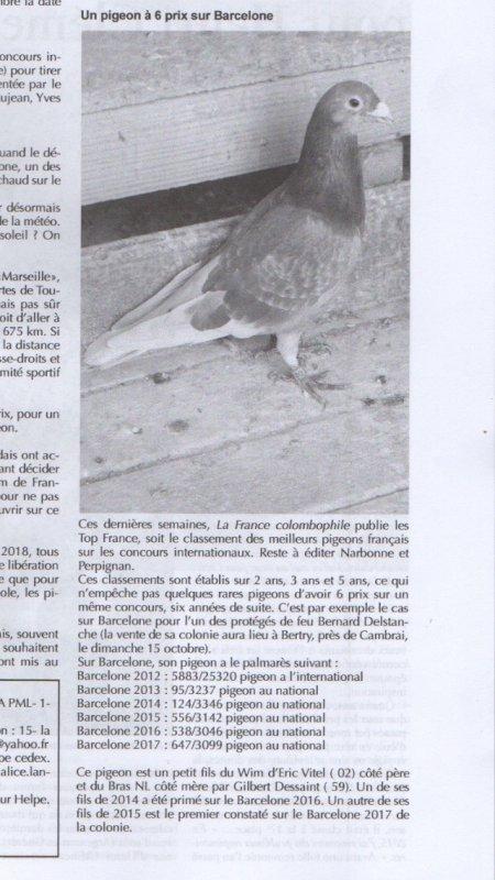 Pigeon de feu bernard Delstanche mis à l'honneur dans la France colombophile