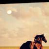 Photo de love-horse57