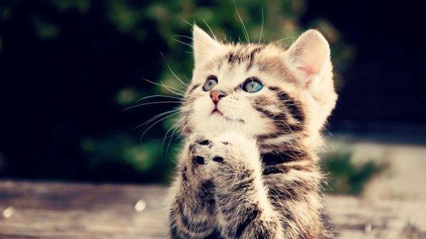 Kitty cute !!