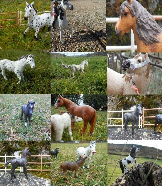 Nos chevaux ♥