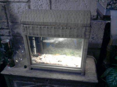 mon nouveau aquarium