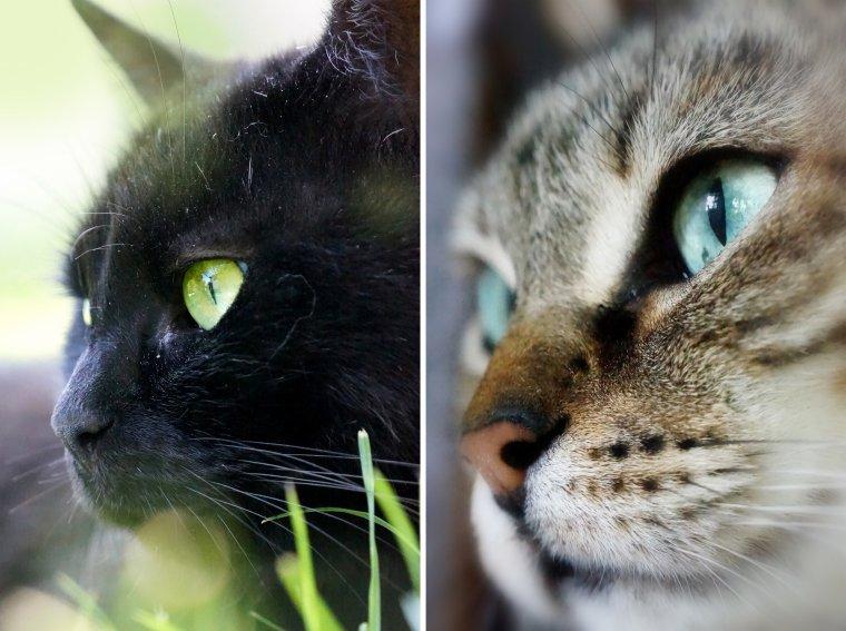 Des p'tits chats, des p'tits chats, des p'tits chats partout