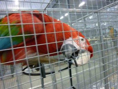 quelque  oiseaux en  cage  dexpo a  tour 2011