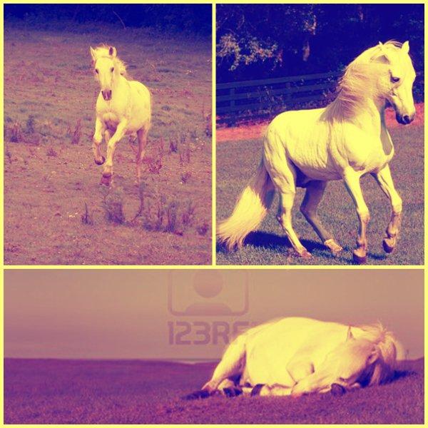 Le galop ? C'est une danse où le cheval n'a plus sa tête... ♥