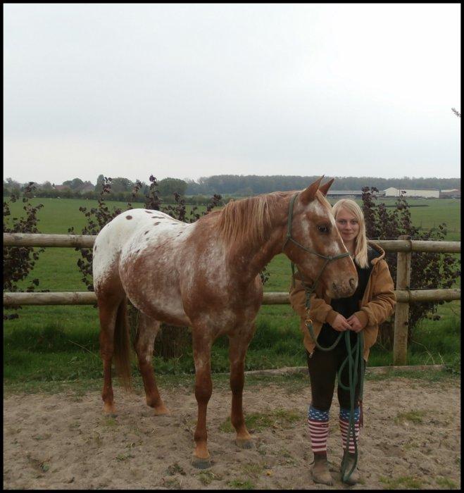 ➜ Mon cheval est ma vie ♥.