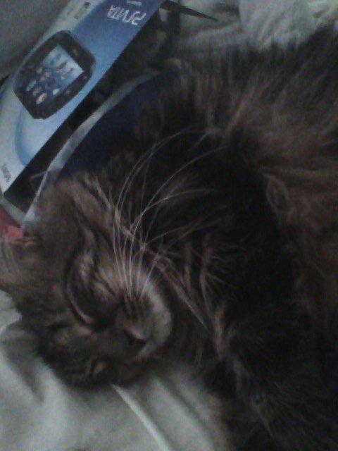 mon chat qui fait la sieste