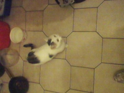 c le chat de ma soeur